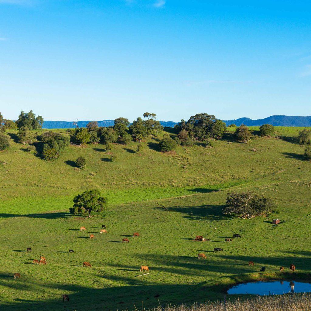 Ag land Hunter Valley